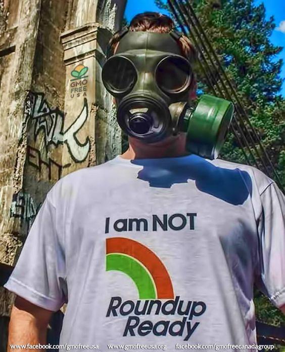 Humans are not Roundup Ready. Boycott GMOs. Boycott Roundup.  Compilation of scientific studies on the effects of glyphosate and Roundup on health and environment: http://gmofreeusa.org/gmos-are-top/gmo-science/glyphosate-studies/  #IAmNotRoundupReady #Roundup #glyphosate #herbicide #GMO #RoundupReady #HerbicideTolerant #pesticdes #HealthHarms #EnvironmentalHarm #StopMonsanto #labelgmos #boycottgmos #bangmos #boycottroundup #banroundup #gmofreecanada #gmofreeusa