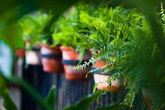 6 originales ideas para decorar con macetas cuidar de - Rosales en macetas ...