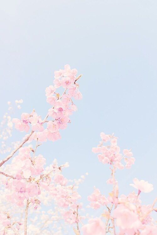Flowers Pink And Blue Afbeelding Kawaii Wallpaper Pastel Wallpaper Cherry Blossom Wallpaper