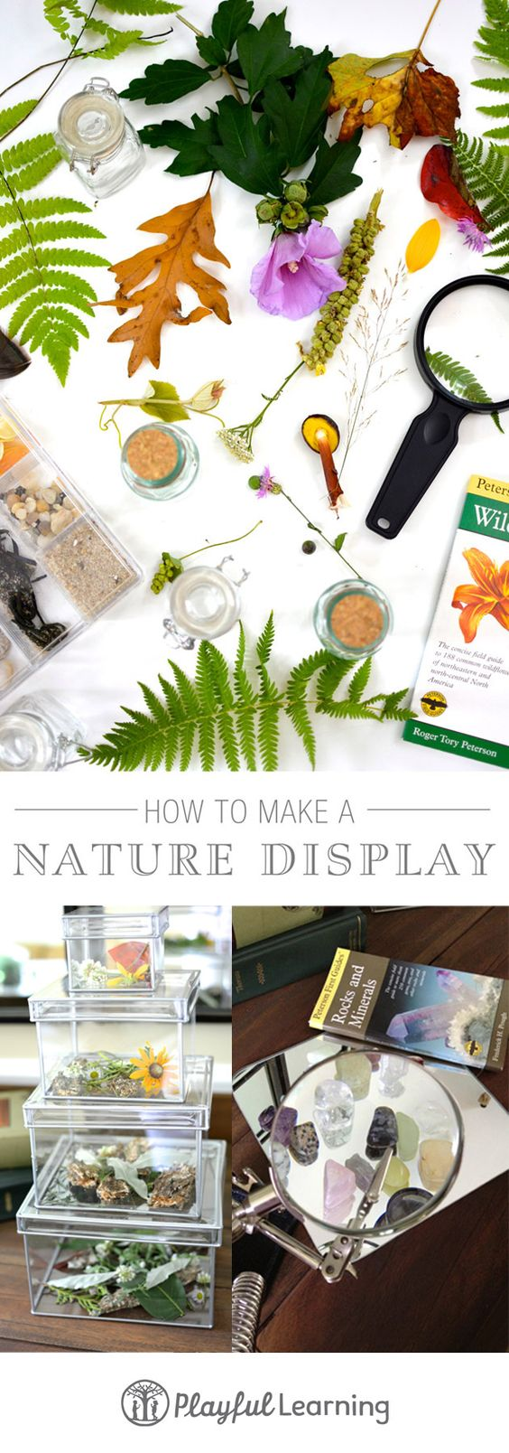 How to make a nature display... Fun video and lovely printables!