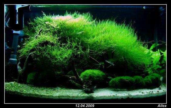 http://i632.photobucket.com/albums/uu42/AIIex/comp_rDSC00437.jpg