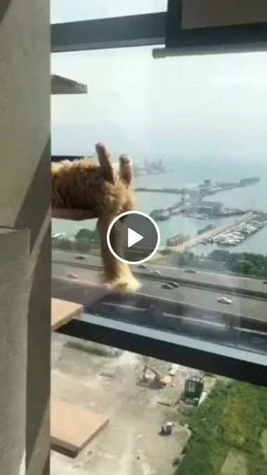 Esse gatinho escolheu o lugar perfeito para descansar