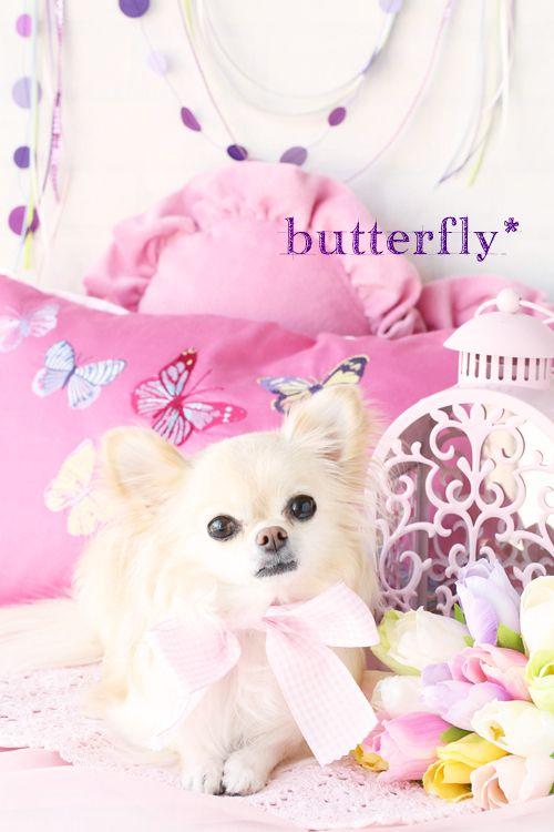 Soooo cute.....