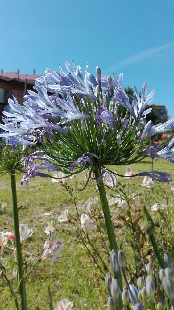 Flores de la abuela