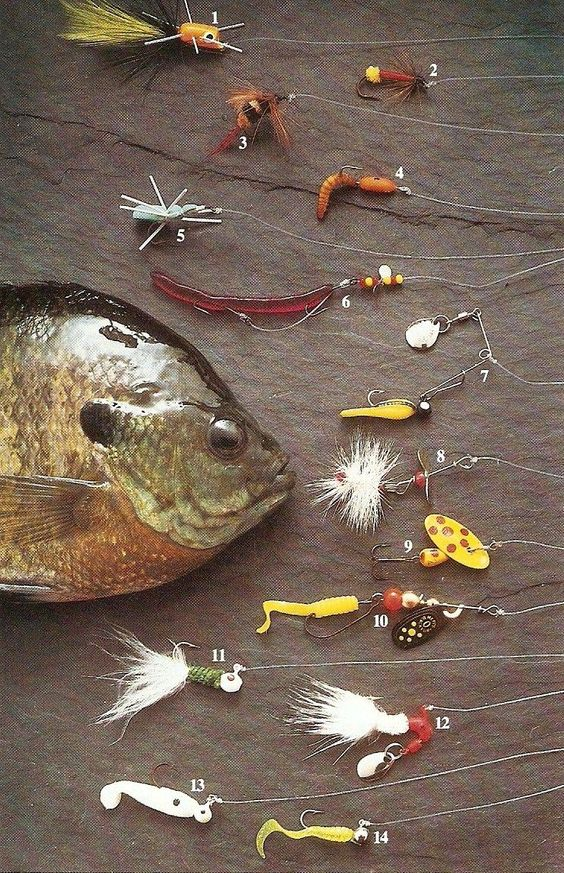 Panfish fishing tips for Crappie fishing secrets