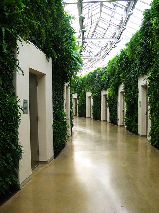 Voted the number 1 public restroom in America! Two walls of live greenery create a sanctuary-like enclave of entrances to individual bathrooms.