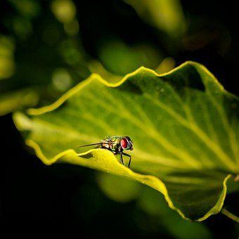 'nur Fliegen sind schöner' ein Foto von 'birdy`s'