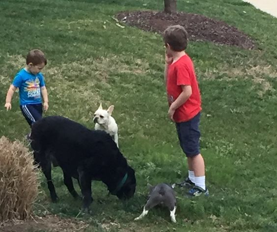These are just 2 of the many young kids in our neighborhood! All the kids love our dogs!