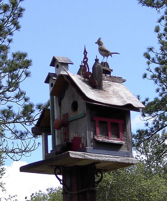 Titmouse-on-birdhouse by scruzia, via Flickr