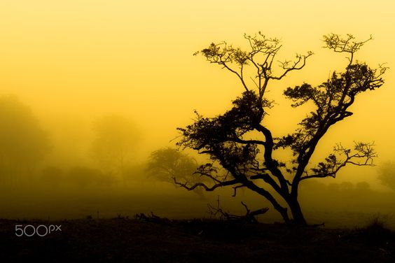 Lonely Tree - During a long and cold walk in a hazy forest I was able to take this picture which made it all worth it.