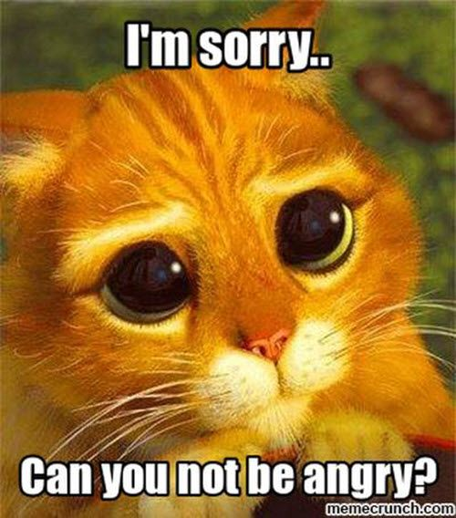 40 Adorable I M Sorry Memes People Won T Be Able To Resist Sayingimages Com Sorry Memes Cute Memes Animal Memes