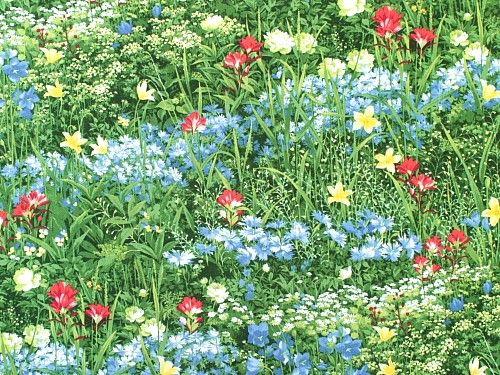 Moda - Sentimental Studios 'Wildflowers VII'  Bildgröße 53 cm x 40 cm bm-263-03-9035