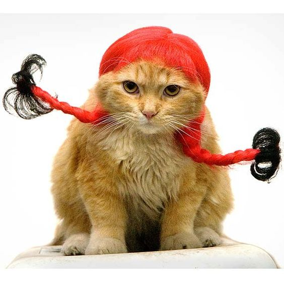 Cat Print Pretty Cat in Red Wig Cute Kitty 8x10 Cat by justamoment