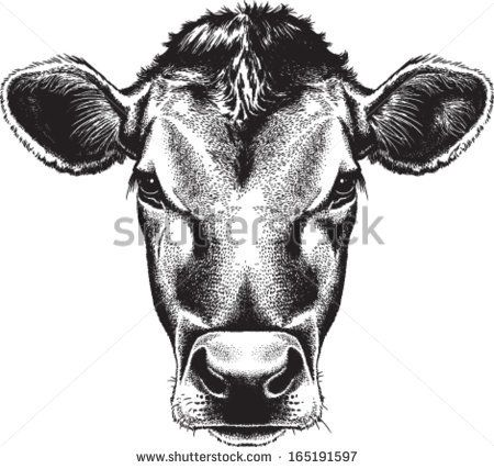 Cow, Black and white sketches and Cow head on Pinterest