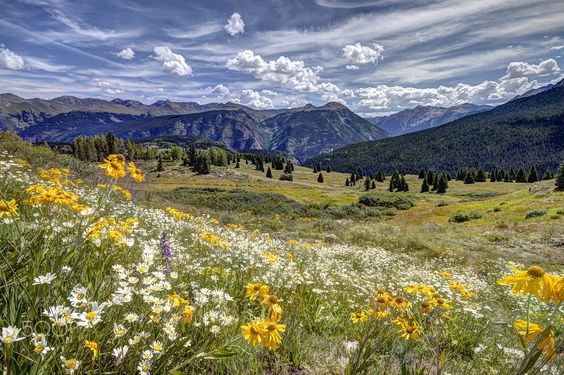 Spring Sprung - A gorgeous day enjoying the fresh air of the high altitude of Colorado. Thank you for your feedback and visits!