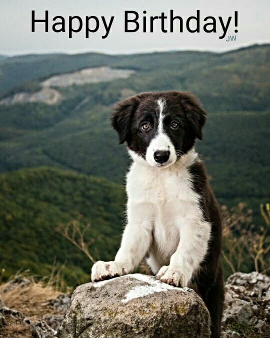 Felicidades Yanil Collie Puppies Dogs And Puppies Best Dogs