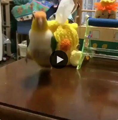 Nossa que alegria esse passarinho está.