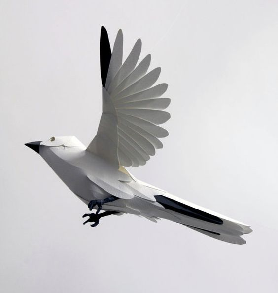 white paper finch #paper #finch #wings #flight