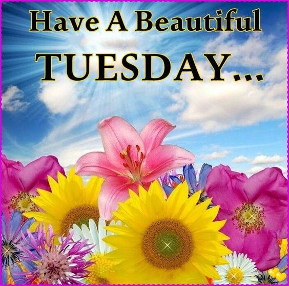 Have a beautiful Tuesday tuesday tuesday quotes happy tuesday tuesday quote happy tuesday quotes happy tuesday morning tuesday quotes and sayings beautiful tuesday quotes