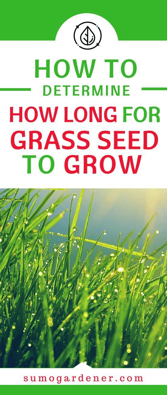 How Long Does It Take To Grow Grass From Seed In 2020 Grass Seed Grass Seeds