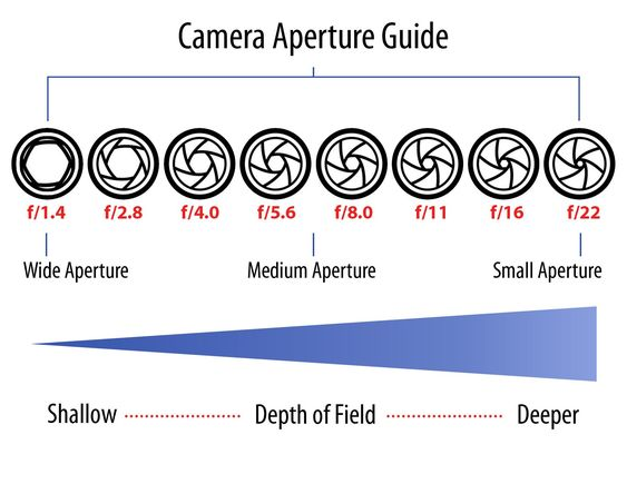 Are You Puzzled By What The Aperture Is And How It Works