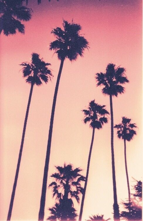 Palm Tree Sunset Palm Trees Pink Sky Pictures