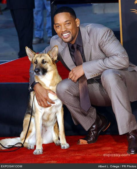 I Am Legend Puppy Will Smith & his d...