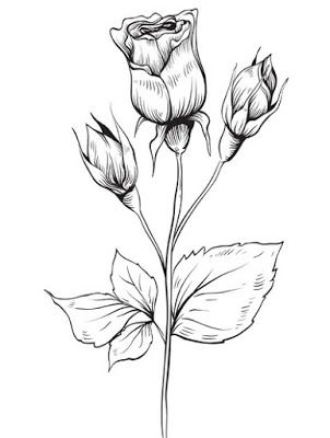 15 Gambar Sketsa Bunga Mawar Combinesia Flower Drawing Saint Valentine Drawings