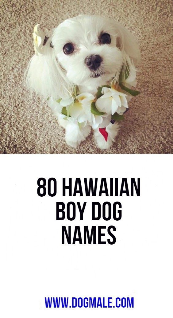 80 Hawaiian Boy Dog Names Boy Dog Names Dog Names Hawaiian Boys