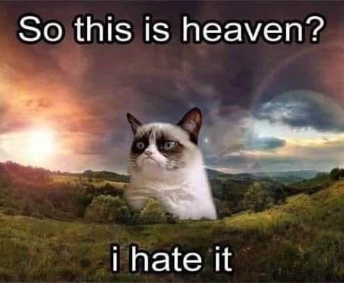 Already Miss Grumpy Cat Grumpy Cat Humor Grumpy Cat Cats