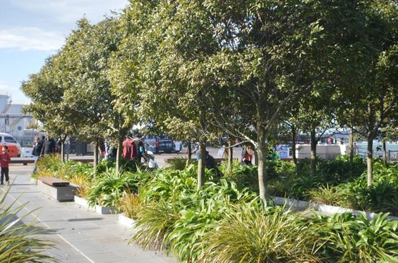 Auckland.  City of Sails: