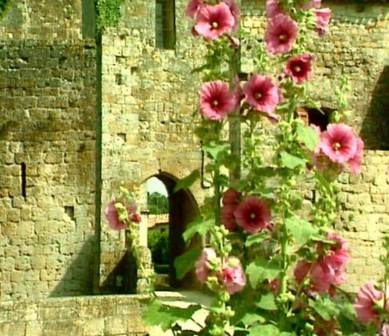 roses tremieres flowers pinterest roses. Black Bedroom Furniture Sets. Home Design Ideas