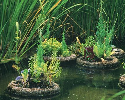 Pond rafts with mini gardens on board made of bound reeds for Fish pond hydroponics