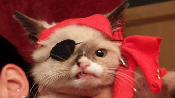 This adorable one-eyed cat was rescued in September. He had severe injuries and many diseases when Blazer Schaffer found her. In order to raise money to save the poor kitten, Schaffer dressed up the cat as a pirate and the rest is history! See his story now: http://videos.komando.com/watch/4102/viral-videos-meet-sir-stuffington