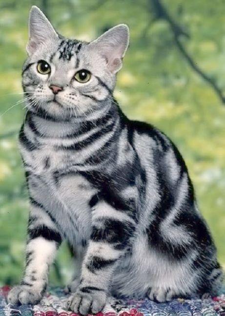 Found Beautiful Cat Names Female Cool Racas De Gatos