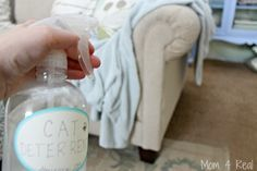 diy cat deterrent stop furniture scratching and urinating on carpet, go green, pets animals