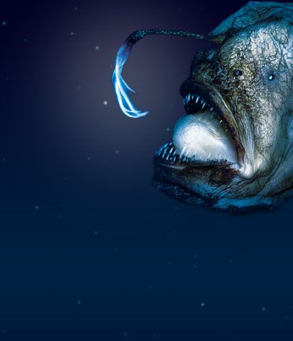 "angler fish. just like the one in ""finding nemo"". a face only a, Reel Combo"