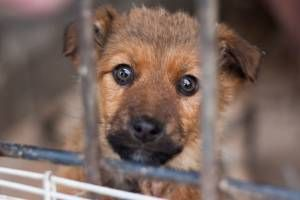 Is it moral to save this puppy?