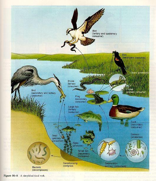 Wetland biome essay test