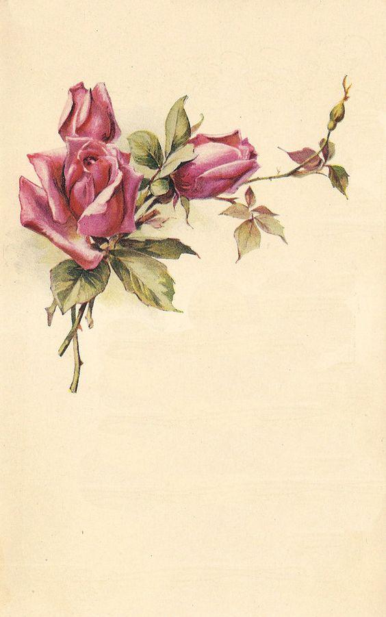rose leaves 6 by jinifur.deviantart.com on @deviantART