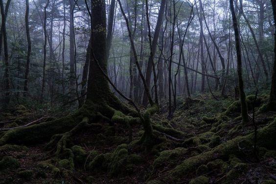 Aokigahara, el bosque de los suicidas 64ecdf355d017762906dcbabe903b295