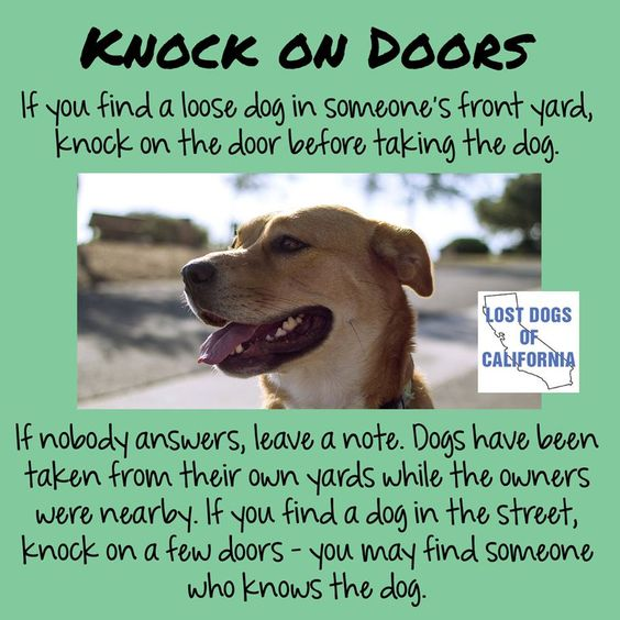 If you find a loose dog in someone's front yard, knock on the door to the home before taking the dog. If nobody answers, leave a note. Dogs have been taken from their own yards by hasty would-be rescuers while the owners were right nearby, but out of sight.  If you find a dog in the street, knock on a few nearby doors – you may find someone who knows the dog.