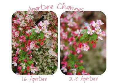 Photo Tips - Magic of Apeture