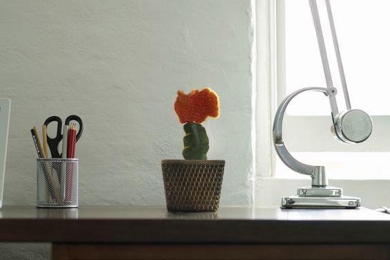 Charmoso e delicado, esse cacto é uma ótima opção para quem quer uma decoração sem flores, mas também adora uma vida em sua decoração.