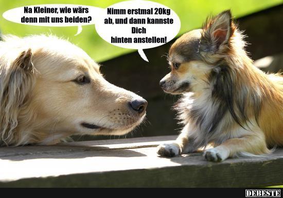 Na Kleiner Wie Wars Denn Mit Uns Beiden Lustige Bilder Spruche Witze Echt Lustig Spruche Tiere Lustige Tiere Tiere
