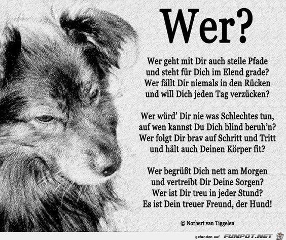 Am 10 Oktober Ist Welthundetag Hunde Gedichte Sprüche