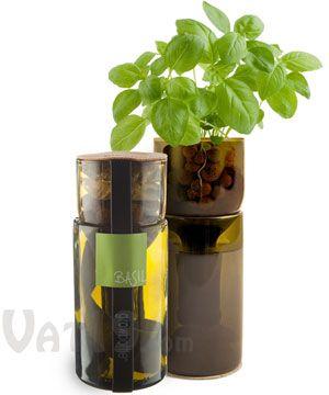 Grow your own herbs using repurposed wine bottles. DIY! DO IT!