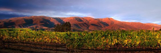 Testarossa Winery | One of Santa Lucia Highlands' most reputable wineries with literally hundreds of 90+ Point rated wines!