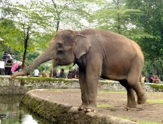 Wisata Di Kebun Binatang Yogyakarta