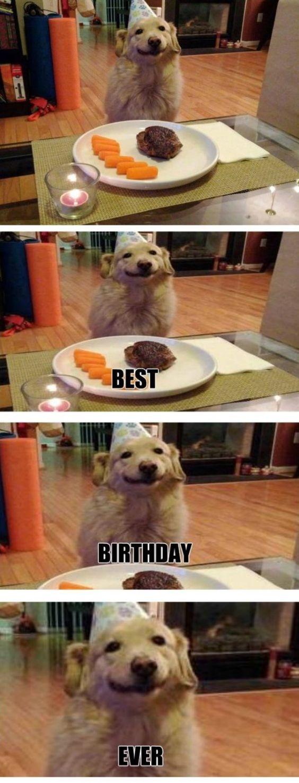 You Da Best Meme Puppy